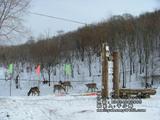 桃山国际狩猎场动物饲养区